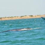 encounter with gray whale