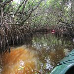 kayaking thru mangrove tunnels off the East River near Everglades City