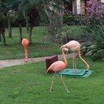Pink Flamingoes walk around the gardens