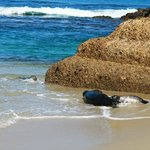 Seals playing in water and sand and rock