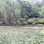 View of the gardens over the waterlily dam