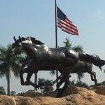 Lely Freedom Horses