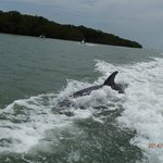 Dolphin sighting on the tour.