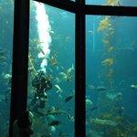 Kelp feeding