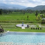 The pool and the rice fields below