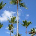 Blue skies and coconut trees!
