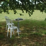 Under an apple tree with meadow view