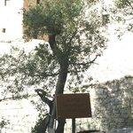 l'albero del tempo di Francesco