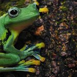 FROGS! features a dozen cool amphibians from around the world.