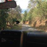 The drive up to Surf Vista Villas