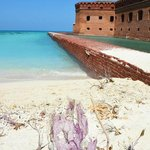 Fort Jefferson purple coral washed up ashore