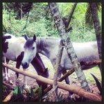 Les superbes chevaux