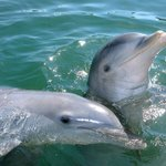 Dolphins are very social animals.