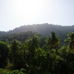 View from our balcony facing the jungle