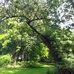 arbre du parc