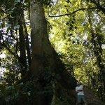tree next to our cabinas