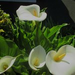 They have lovely callas!