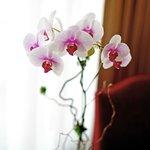 Ladies' preferred Orchid Floor