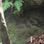 la pequeña rana rojita