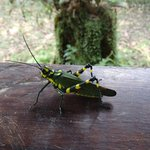 a big and colourful insect on my porch
