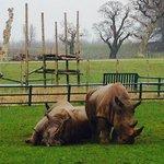 breathtaking Rhinos