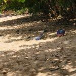 Pali Ke Kua beach. Sun for some. Shade for others.