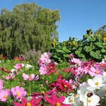 Colourful flowers on a sunny day