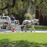 Take a carriage ride like Cinderella !