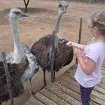 And you can feed the Ostriches!
