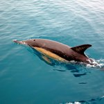 dolphin siting