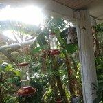 Hummingbird paradise, where they feed