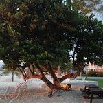 favorite tree on beach with hammock