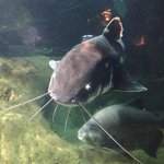 An inhabitant of the aquarium.