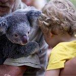 коала и айк