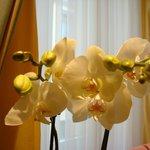 Живые орхидеи в номере... Просто чудесно!