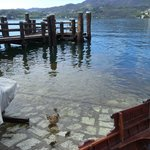 вид на пристань и озеро с утятами