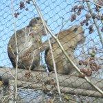 Monkeys never dissapoint!