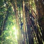 Monkey tree.