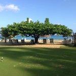 Almond tree on edge of beach