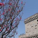 館屋根と花桃