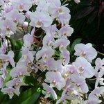 温室にあるランの花
