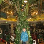 The tree in the middle of the diningroom