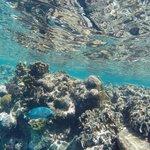 Snorkeling with Milos