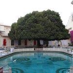 Tree at pool