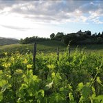 This is one of the many views from Agriturismo Marciano.