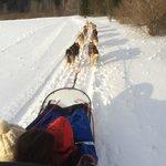 Dog-sledding with the kids