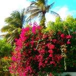 Gorgeous Poolside colour