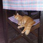 The restaurant's cat