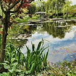 Another view of the lily ponds in Monet's Gardens