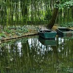 Boats moored along the shore of Monet's lily ponds